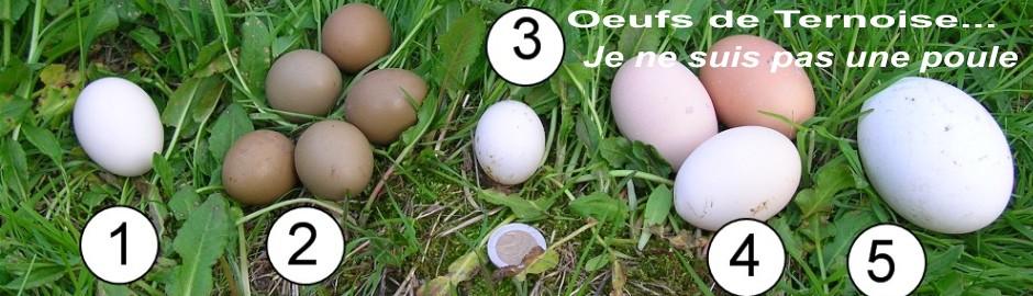Des oeufs mais qui les a pondus une poule ou une oie for Oeuf de poule mou